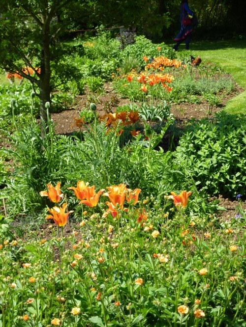 Orange tulips at Coton Manor, with colour co-ordinated chicken.
