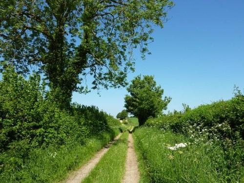 Going off-road near Damerham