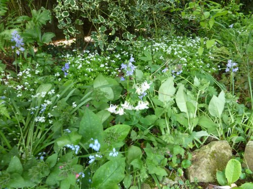 Using Woodruff and other plants to lighten a shady area