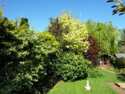 The tree border on 16th May