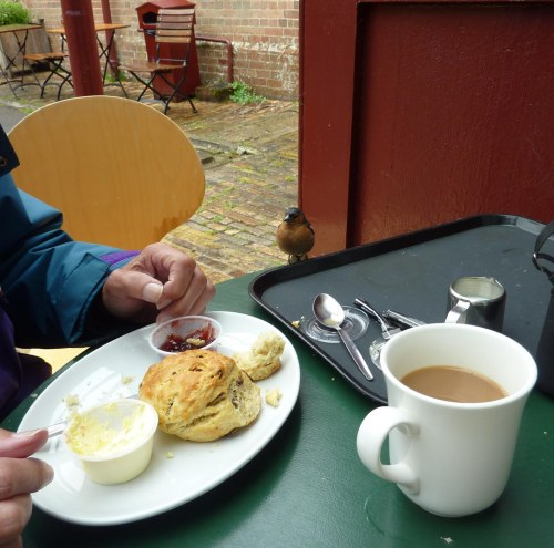 Cream Tea with wet chaffinch