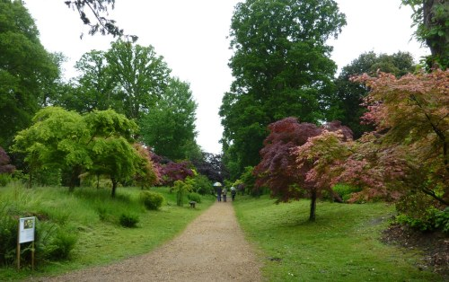 The Acer walk. I rather liked the pink one on the right.