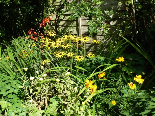 A closer look at the Rudbeckia