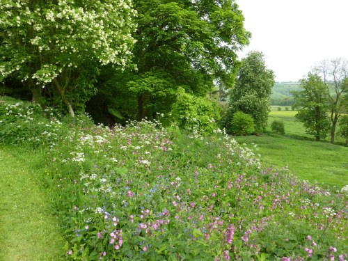 A bank of  wild flowers.